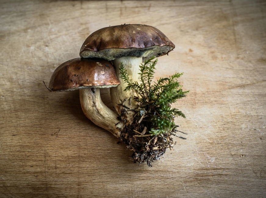 Shrooms Edibles Online Canada- Know Why Millenial Generation Is Talking About It